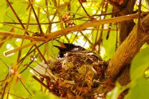 ptak w gnieździe